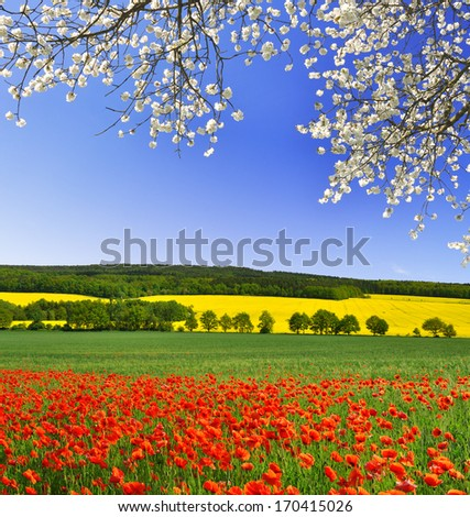 spring landscape with red poppy field - stock photo