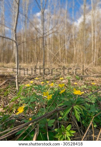 spring landscape with yellow flowers closeup. shallow dof - stock photo