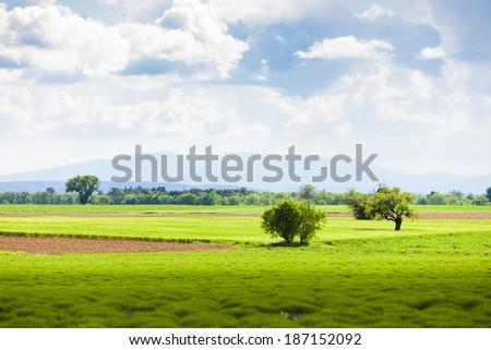 spring lavender field, Plateau de Valensole, Provence, France - stock photo