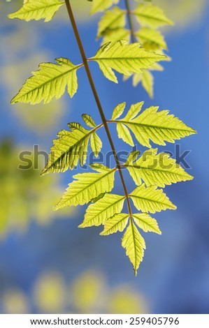 Spring leaf of tree. Nature composition. - stock photo