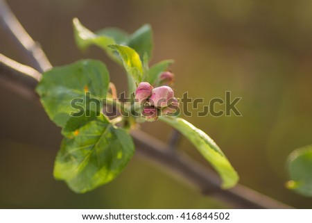 Spring leaves and flowers on trees