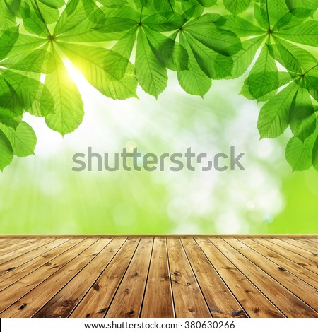 Spring leaves of chestnut tree (Aesculus hippocastanum)  with wooden board. - stock photo