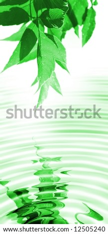 spring leaves reflecting in water - stock photo