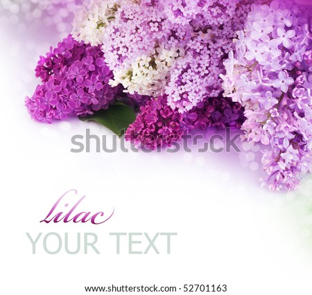 Spring Lilac Border.Isolated on white - stock photo