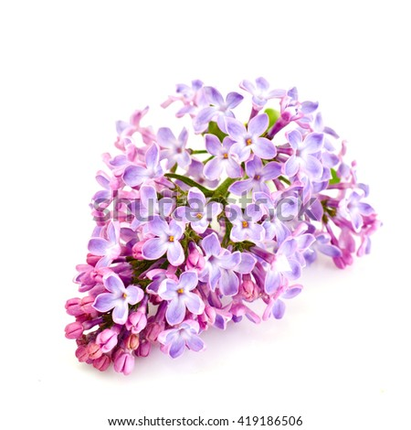 Spring Lilac Flowers on a White Background Studio Photo - stock photo