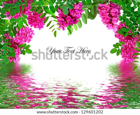 Spring Locust blossoms above a water reflection framing a message area. - stock photo