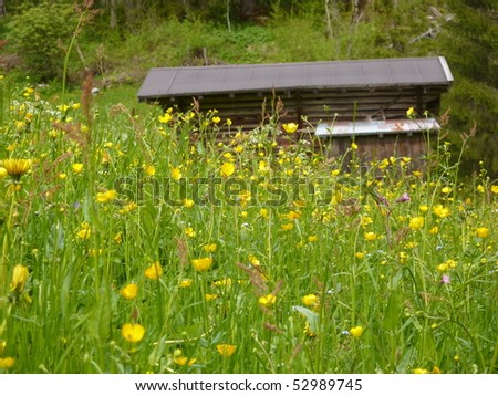 Spring meadow in the mountains with a barn in the background - stock photo