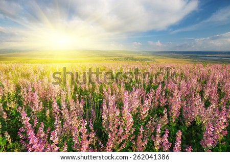 Spring meadow of flowers. Composition of nature. - stock photo
