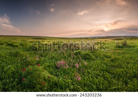 Spring meadow with flowers on sunset - stock photo