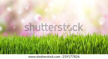 Spring meadow with sunny grass, nature background - stock photo