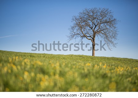 Spring meadow with yellow flowers and lonely tree  - stock photo