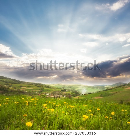 Spring meadows close up: green grass and dandelions - stock photo