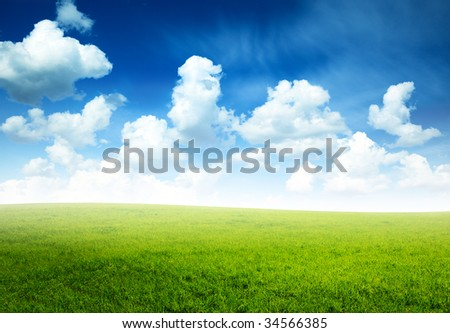 spring morning and green field