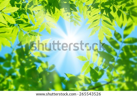 Spring natural background of green leaves on the background of the sunny sky - stock photo