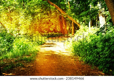 Spring nature background with sun beam / green landscape with sunshine/ Sunny forest early in the morning, filter - stock photo