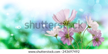 Spring nature.garden flowers - stock photo