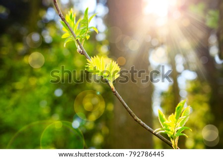 Spring Nature Background Green Plants And Leaves Against The Of Sunlight