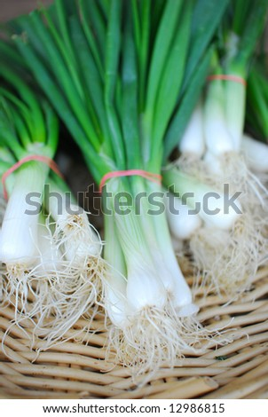 Spring Onions - stock photo