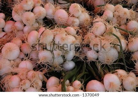 Spring onions - stock photo