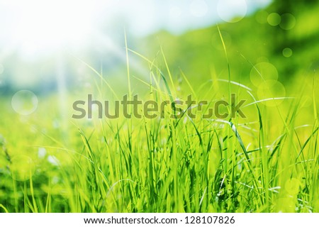 Spring or summer abstract nature background in defocus with grass in the meadow and blue sky in the back - stock photo