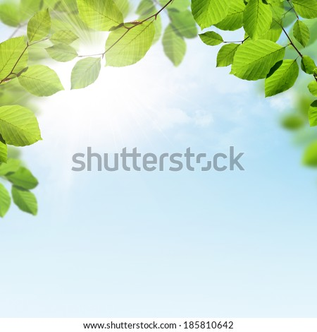 Spring or summer background with branches of green leaves, sunshine and a blue sky