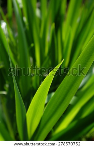Spring or summer background with green grass - stock photo