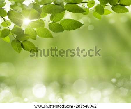 Spring or summer season abstract nature background - stock photo