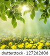 Spring or summer season abstract nature background with grass and dandelion - stock photo