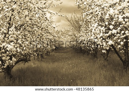 Spring orchard - stock photo