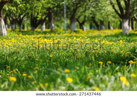 spring park - stock photo