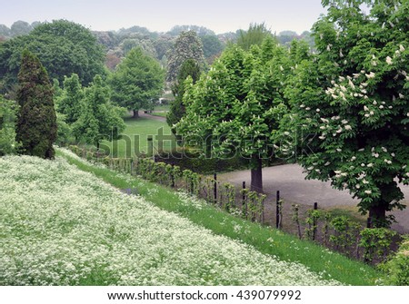 Spring park with blooming chestnut trees and flowers goutweed in the foreground. - stock photo