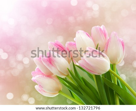 Spring pink tulips with bokeh light in background - stock photo