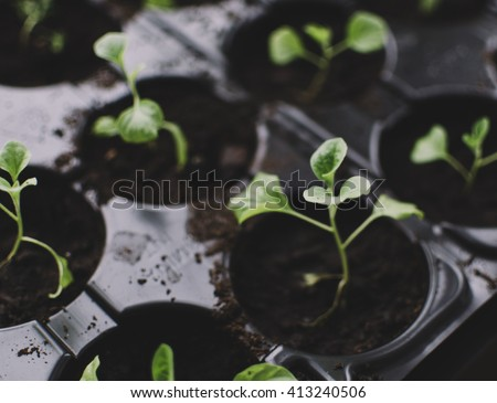 Spring plant seedlings in the box - stock photo