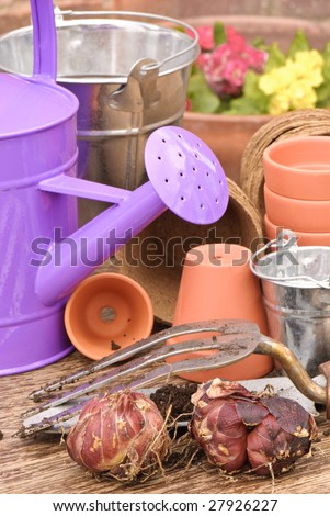 Spring planting bulbs with watering can in rustic setting - stock photo