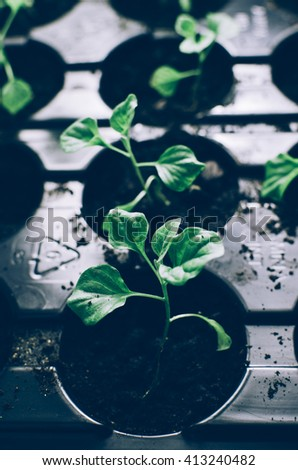 Spring plants seedlings in the box on home table - stock photo