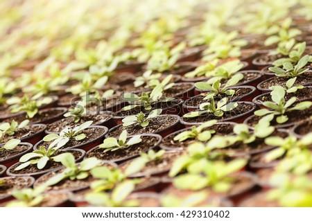 spring plants seedlings under the sunlight - stock photo