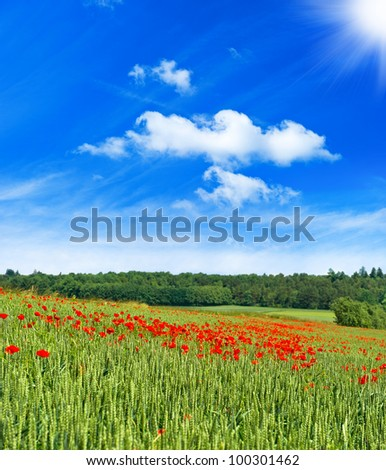 spring poppies field landscape with sunny blue sky