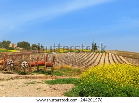 Spring rural agriculture landscape - yellow flowers blossom, arable land and sleeping vineyards Spring nature rural landscape. Mediterranean, Israel  - stock photo