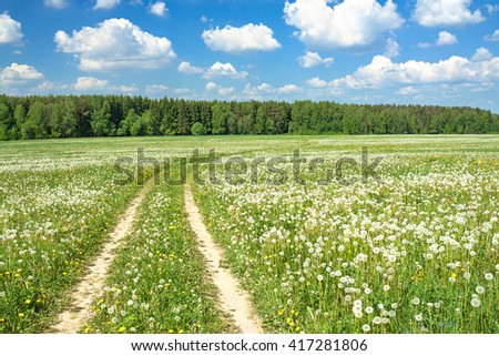 spring  rural landscape with a blossoming meadow, the road and the blue sky