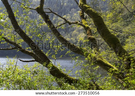 Spring scene with green trees by the lake - stock photo
