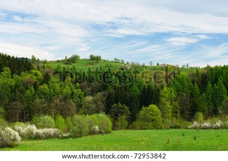 Spring scenery with fresh grass and flowered trees - stock photo