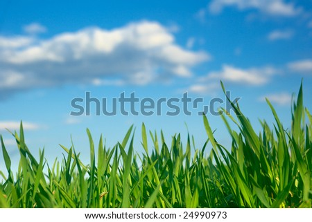 Spring scenery with fresh green grass and blue cloudy sky