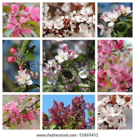 Spring season - nature collage with sakura,apricot,lilac and apple tree flowers - stock photo