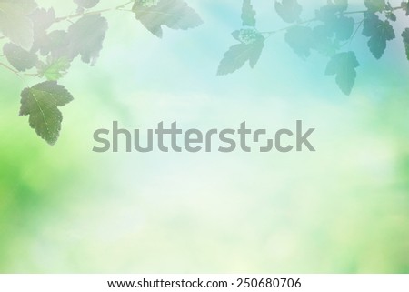 Spring sky with sunny field with branch of tree - stock photo
