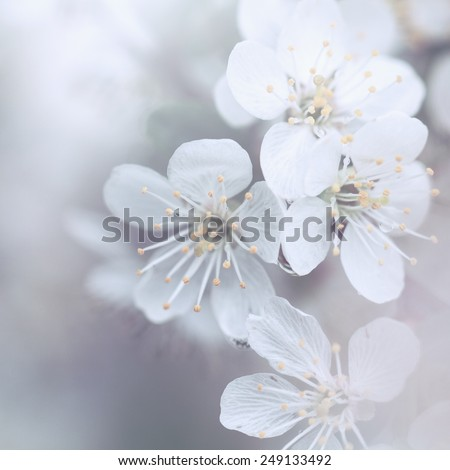 spring soft flowers - stock photo