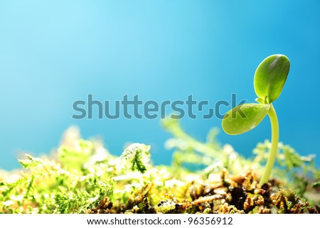 Spring sprout on blue background - stock photo