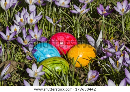 Spring still life - colorful easter eggs lying in Crocus meadow