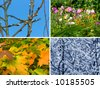 Spring, summer, autumn and winter, nature seasons background - stock photo