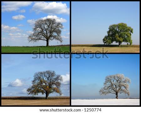 Spring, Summer, Autumn, Winter - stock photo