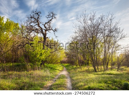 Spring sunset in beautiful magic forest with green plants, trees and trail. Landscape